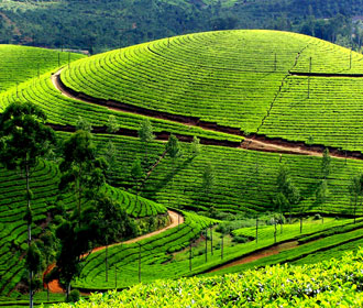 travel in kerala to munnar