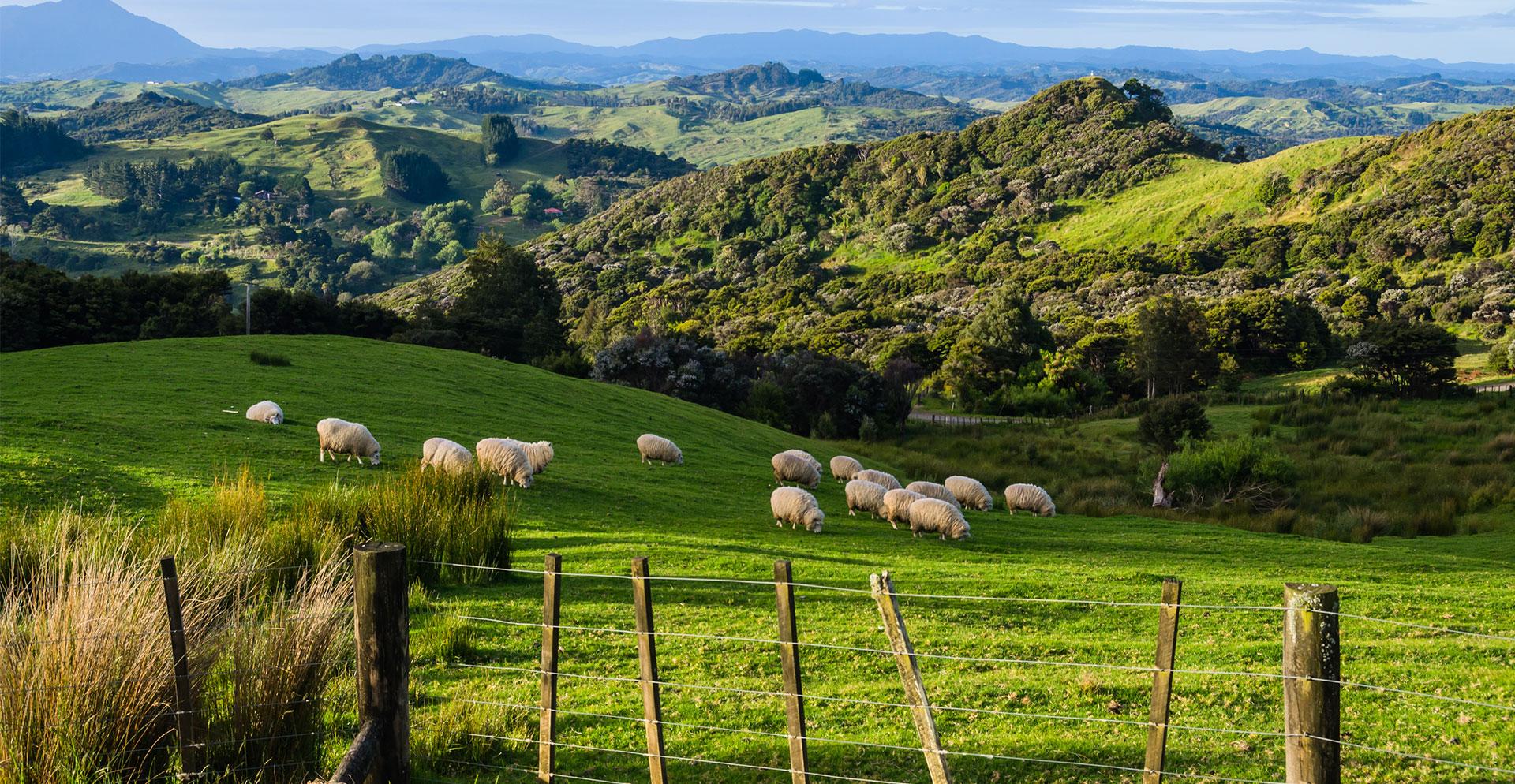 Voluntário na Nova Zelândia