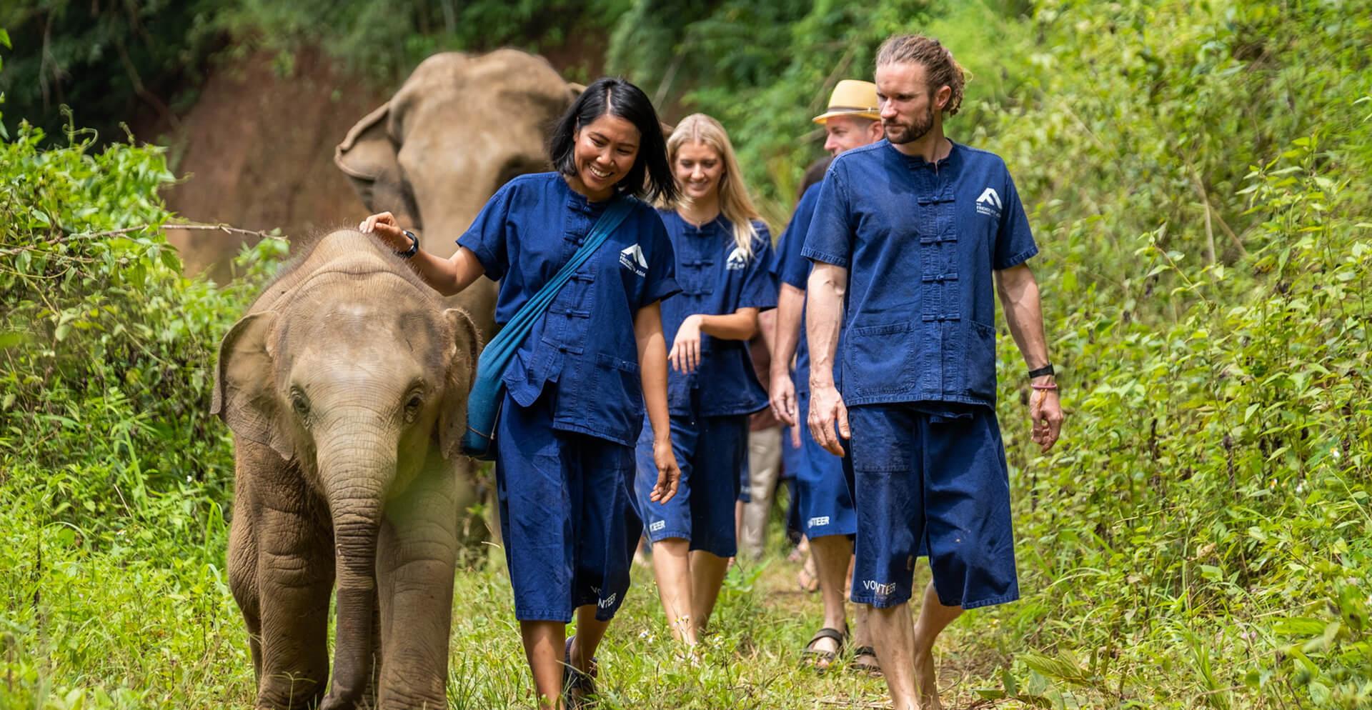 Projetos Voluntários de Conservação da Vida Selvagem no Exterior