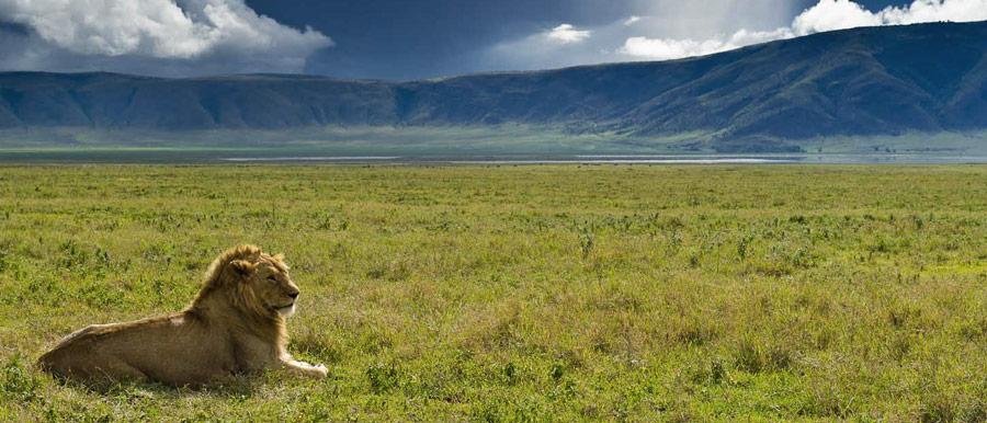 3 Day Tarangire National Park, Ngorongoro Crater, Lake Manyara