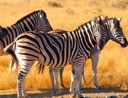 4 Day Tarangire National Park, Serengeti National Park, Ngorongoro Crater Safari