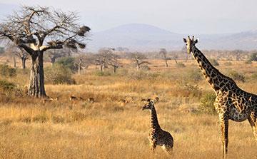 4 Day Tarangire National Park, Serengeti National Park, Ngorongoro Crater Safari