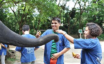 Elefantes 2 Praias Voluntário e Viagem Tailândia