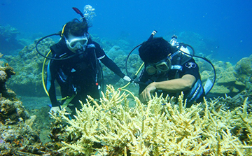 Marine Conservation Volunteer Program in Bali