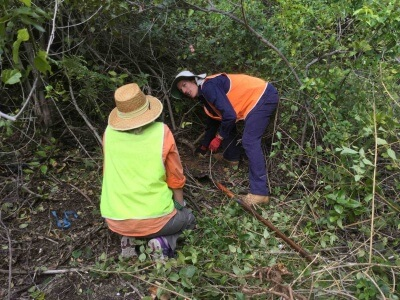 Conservation Volunteering Program in New Zealand