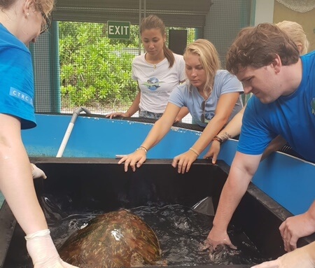Turtle Conservation Program in Northern Australia