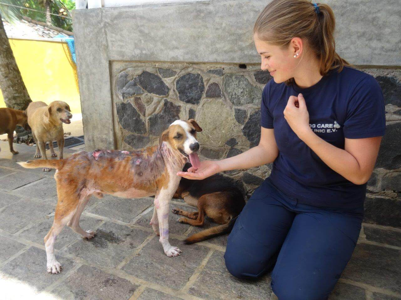 Volunteer in a Dog Care Project