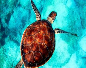 Programa de voluntariado de tortugas marinas en Zanzíbar