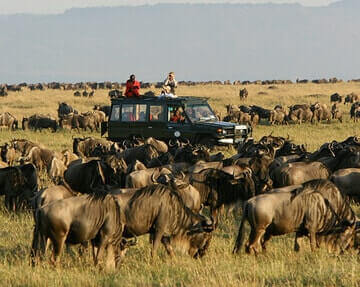 3 Days Masai Mara Joining Safari