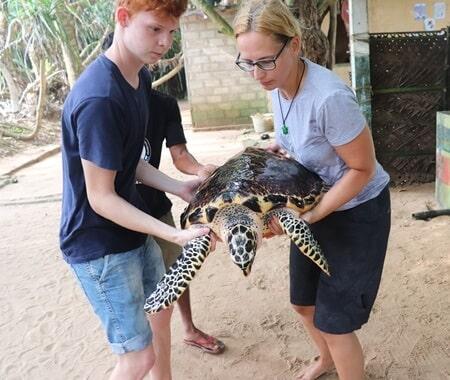 Voluntariado para a Conservação da Tartaruga Marinha no Sri Lanka