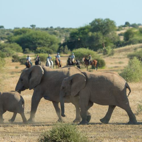 Safari de vida silvestre de 2 días de fin de semana
