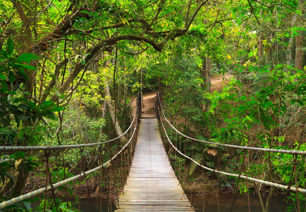 Khao Yai National Park Day Tour (FROM BANGKOK)