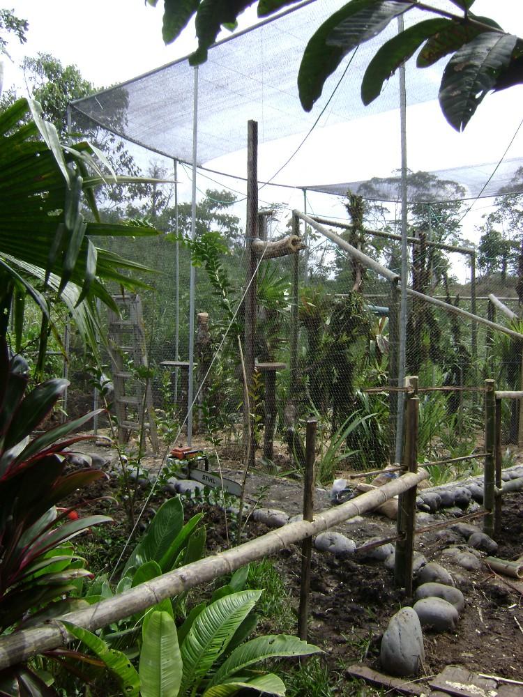 Volunteer in Ecuador at Amazon Animal Rescue Center | VolSol