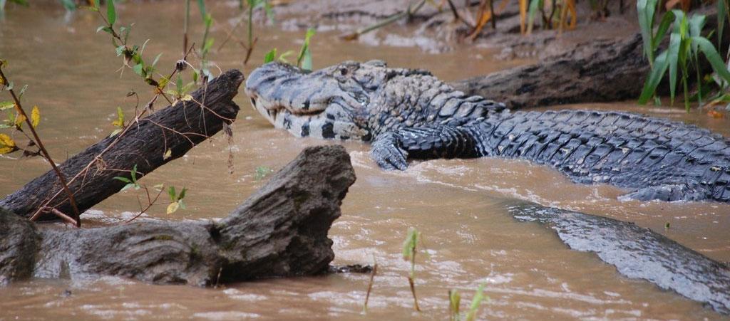 wildlife-conservation