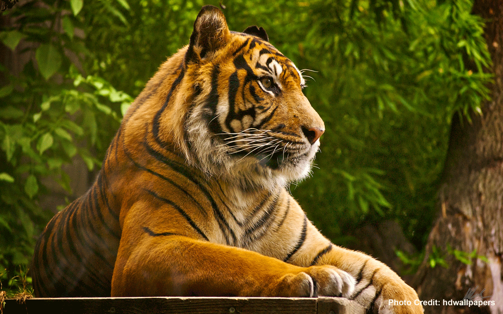 Beautiful-Belligerence-of-Indian-Wildlife