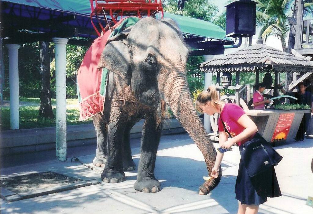 Elephant program
