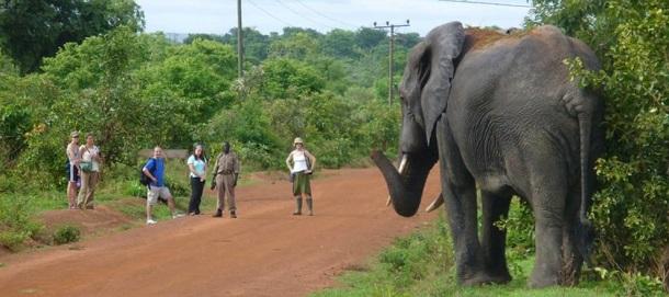 Ghana-Mole-National-Park-Africa-Tourism
