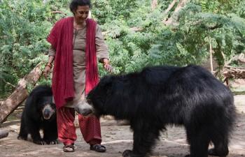 Wildlife Sancturies In India