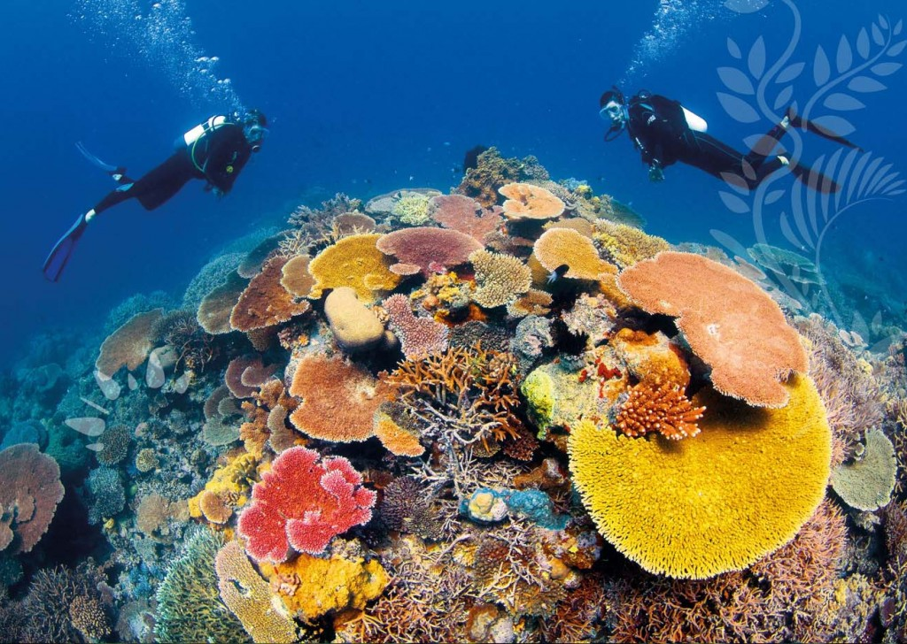 great_barrier_reef Australia