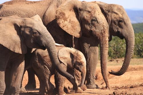Addo Elephant Park Port Elizabeth