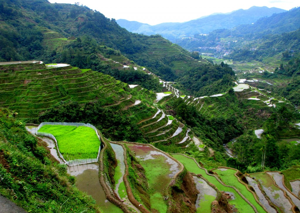 Banaue_Rice_Terraces,Phillipins-Asia