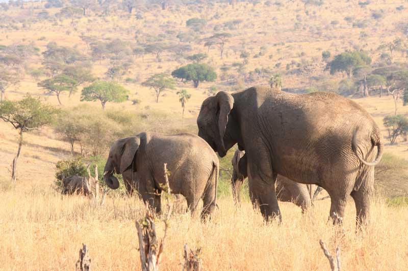 Wildlife-safari-in-Tanzania with volunteering solutions