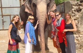 elephant camp jaipur india