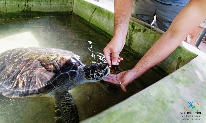 sea-turtle-conservation-volunteer-projects-abroad