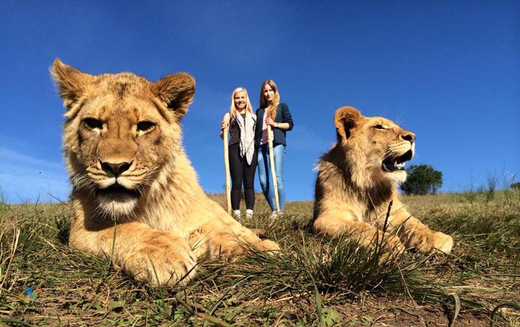 wildlife-volunteering-in-South-Africa