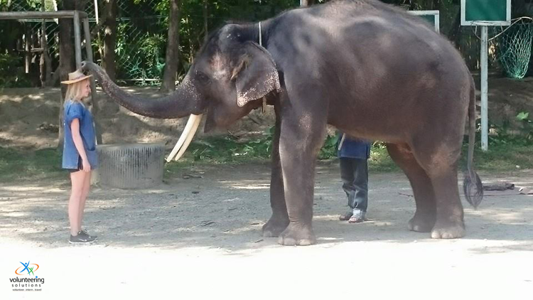 working-with-elephants-in-Thailand