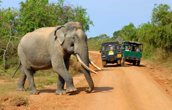 yala-National-park-in-Sri-lanka
