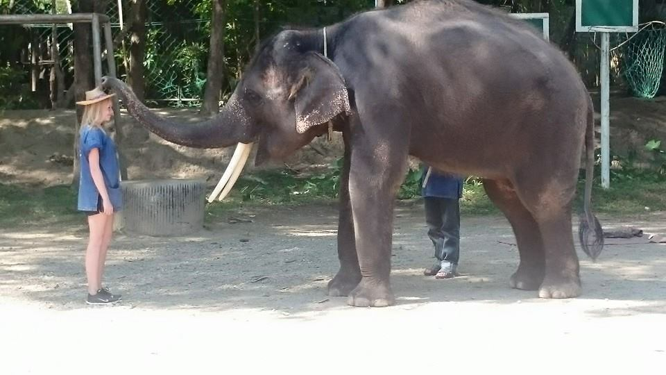 Elephant camp in Chiang mai Thailand