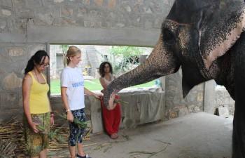 India Elephant project Jaipur