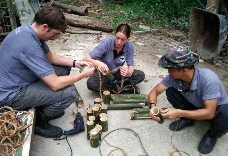 Sun Bear Conservation Volunteering Project, Malaysia