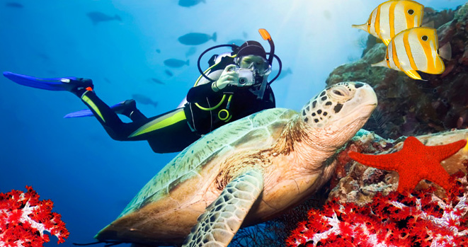 Volunteering Destinations With Some of The Best Diving Spots in The World