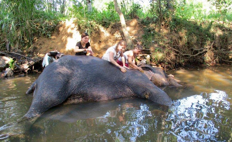 Elephant care volunteer project in Sri Lanka