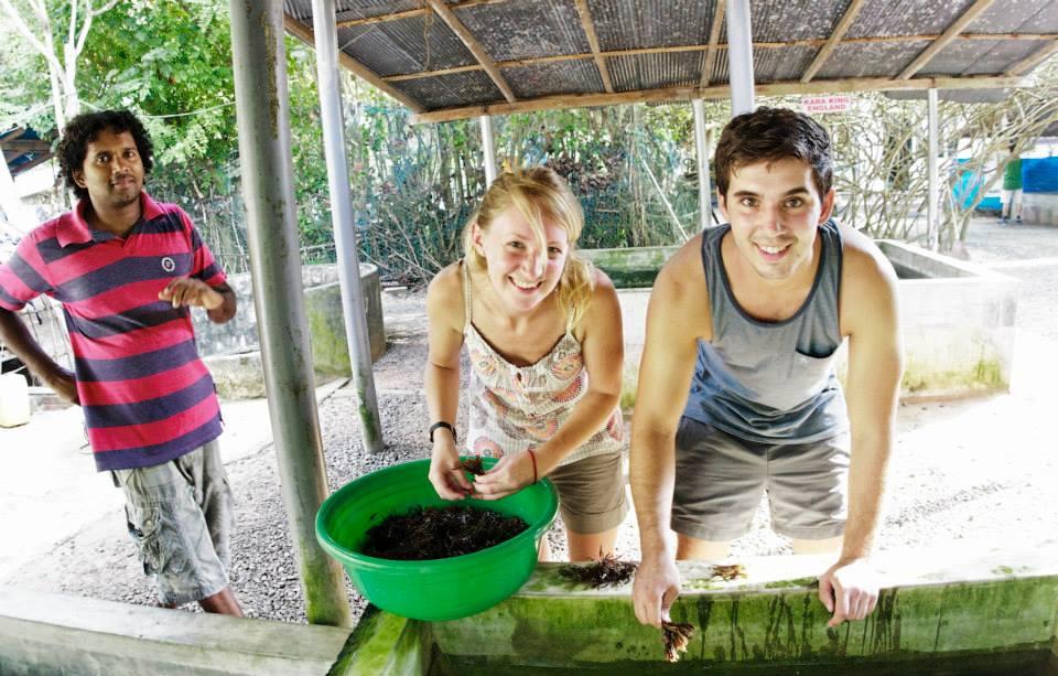 Essential Keys For A Successful Volunteer in Sri Lanka Program