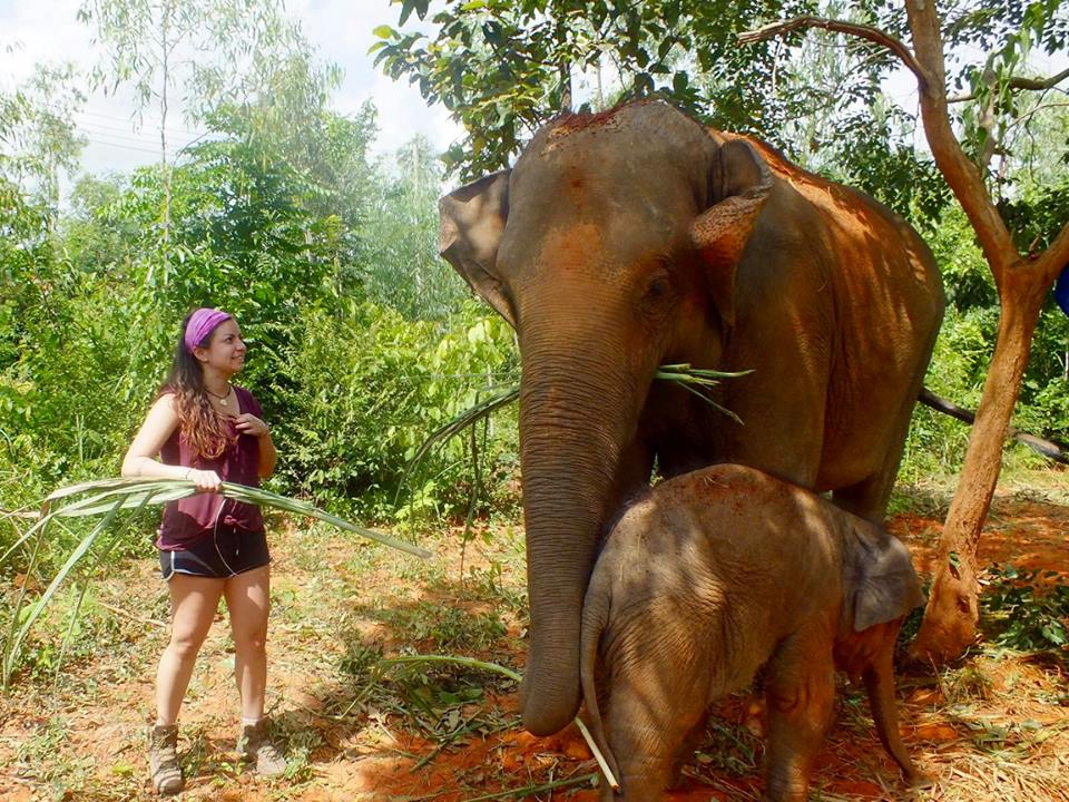 Thailand Elephant volunteering