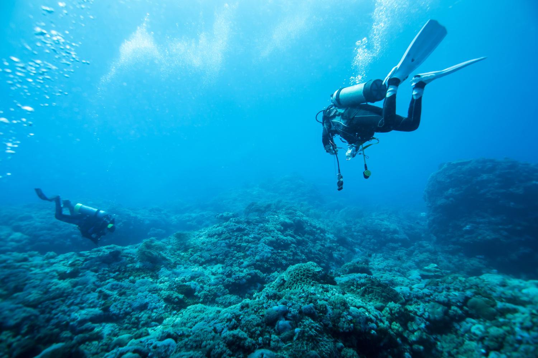 marine conservation in Bali