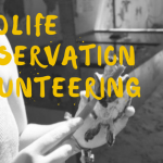 What To Expect From A Wildlife Conservation Volunteer Program