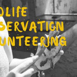 wildlife-volunteering abroad