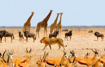 Benefits of Wildlife Conservation Volunteering