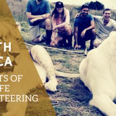 south-africa-wildlife volunteering benefits