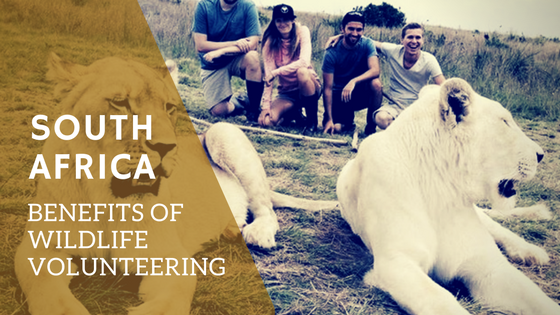 5 Unique Benefits of Volunteering for A Wildlife Project in South Africa