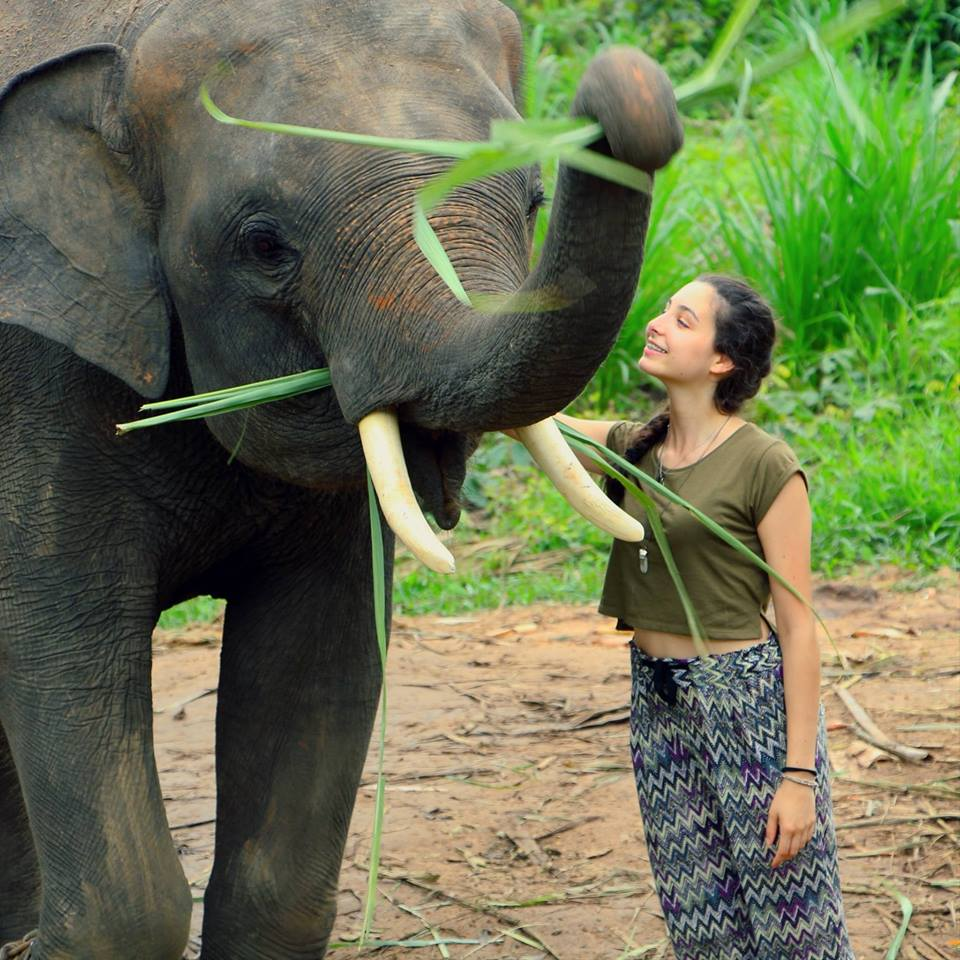 volunteer with elephants in Surin