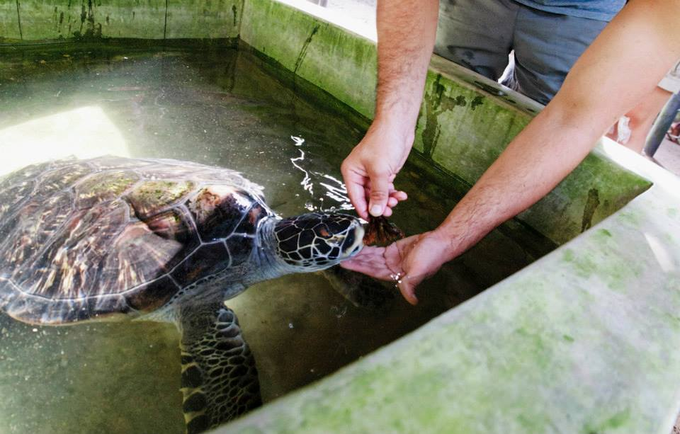 turtle conservation in sri lanka