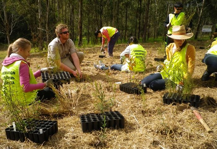 Australia - Tree Planting volunteer work