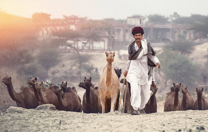 Pushkar camel fair, Rajasthan
