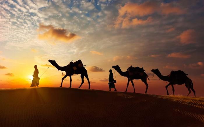 bikaner-camel- safari