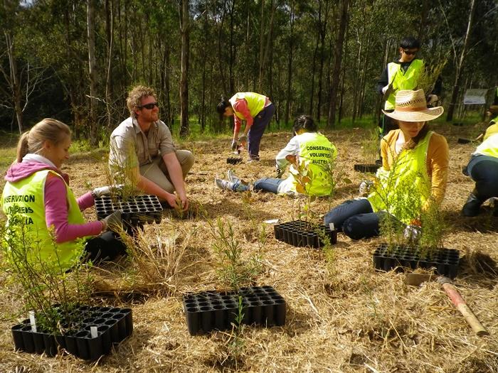 Conservation volunteering in Australia